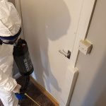 Bed bug infestation – a serious or insignificant problem
